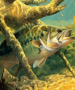 Семейный отдых с рыбалкой